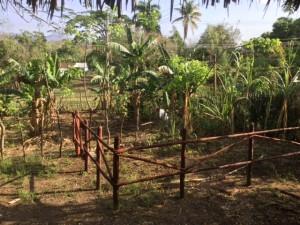 Planting corn in Trinidad, Cuba.